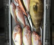 釣り楽しみ方教えます 初心者さん、経験者さんも歓迎です( ^ω^ )