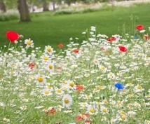 ~フラワーセラピー ~ 花からの癒しのメッセージをお伝えします♪