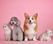 初めて犬、猫を飼われる方の疑問を解決します 獣医師が皆様と動物たちとの門出をサポートします。