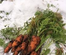 野菜の育て方について、いいアドバイスできます 家庭菜園やプランター栽培をやっている方へ!!