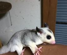 小動物の爪切りのコツ教えます 些細なことでもお気軽にご相談下さいね