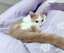 猫ちゃんのお悩みお応えします 猫ちゃんのお悩みご相談ください!