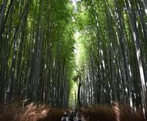 京都でランチ♪おすすめカフェをアドバイスします。(その他観光や現地情報に関することも)