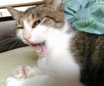 アニマルコミュニケーションで動物語を通訳します ウチの子が何を言っているのか?思っているのかを知りたい方