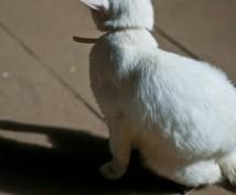 【白猫】白猫プロジェクトのランク上げの代行します。【ランク上げ】