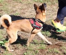 家庭犬訓練士がわんちゃんのお悩みを一緒に解決します 愛犬にストレスのかからないベストな方法をご提案致します。