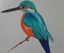 写真から鳥のイラスト描きます