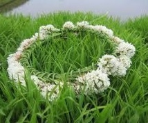 お花が好きな方の五つのお花のセラピー。あなたの誕生花をお伝えします。