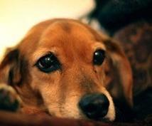 ベジタリアン犬を飼ってます。これから犬を飼おうと思っている人へのアドバイス  手作りご飯など。