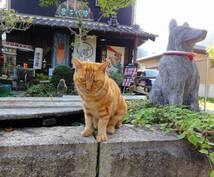 """あなただけの旅行プラン作成いたします 旅の""""猫の手""""も借りたい!そんなあなたのお手伝い☆★"""