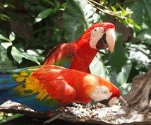 南米在住!旅行アドバイザーが旅行の相談にのります 初めての南米旅行におすすめ!不安を解消します