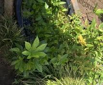 ビオトープの作り方教えます 生き物が好きな方、庭に生き物を呼びたい方オススメ!