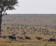 アフリカ・ケニア旅行のアドバイス、質問を受付けます