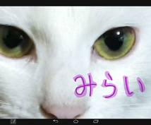 開運!招き猫のタロット占いで未来を知る!近い未来、遠い未来、あなたの未来が分かります。