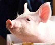 畜産業界へのあなたの疑問にお答えします!消費者としての最低限の知識をもてます!