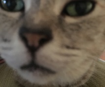 猫の気持ち飼い方かわからないひとおすすめしてます 猫の飼い方か猫の気持ちおしえます