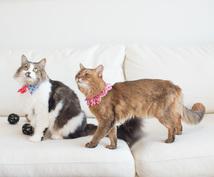 猫のしつけをアドバイスします 猫と健康で快適に暮らすために、猫のしつけ方をアドバイスします