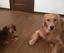 愛犬の食事相談☆あなたの愛犬の悩みを聞いて的確なドッグフードや手作り食などをご提案します!