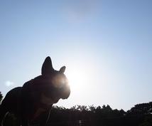 遠隔でペットさんのチャクラ調整とヒーリングをします ペットさんを宇宙の光エネルギーで満たします