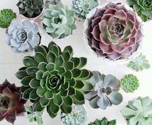 観葉植物相談に乗ります♪グリーンの悩みや相談受け付けております。