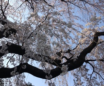 『受験相談』早稲田大学政経卒業生が、あなたが勉強すべき理由と志望校を考えます『学生さん親御さん向け』