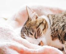 わんちゃん・ねこちゃん介護のご相談お受けします 大切な家族(ペット)のお悩みを現役動物看護師がお聞きします