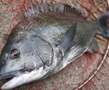 内房釣りポイント&必ず釣れるウキ仕掛け教えます 普段釣れない人 始めたばかりの人