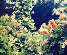 愛と美を輝かせるヒーリングをします ピンクダイヤモンドレイで輝きを引き出すお手伝いをします。