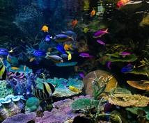 日本全国水族館お調べします 元飼育員が教える!日本国内オススメ水族館!入館料がオトクに!