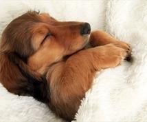 愛犬のしつけやお悩み解消を最適なアドバイスでお手伝いいたします。