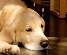 眠れないとき、寝落ちするまで付き合います 同じ考えがグルグルするとき、漠然とした不安に襲われるとき