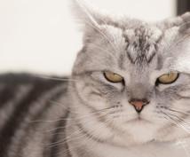 ペットの気持ちをタロットで見ます 表向きの気持ち、本音をタロットカードで見ます