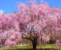 【傷ついた自尊心へ】 木花咲耶姫さまの桜花ヒーリング