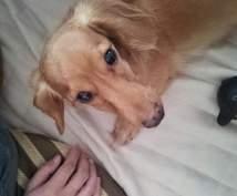 シニア犬の介護・ケアに関するご相談受け付けます 介護生活を楽しく過ごしたい方へ♪