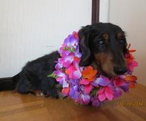 ハワイアンアロハタロットで、幸せにお導きします