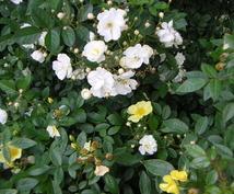 お庭や玄関先を素敵にガーデニング・デザインします どんな草花をどんなふうに植えたらいいかわからない方へ!