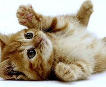 【霊感写真鑑定】ワンちゃん、猫ちゃん、もしも~し? 大事な家族の気持ちをリーディング