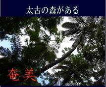 奄美大島をディープにガイドします ここが知りたい!ウェブにはない情報をお伝えします。