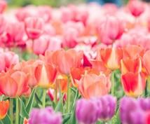 園芸に関するお悩み解決します 植物の育て方などでお悩みの方へ!