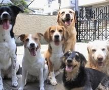 動物看護師が犬、猫、小動物の飼い方アドバイスします ペットの飼い方や付き合い方に悩んでる方!
