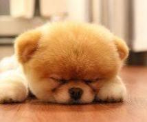 睡眠の質を改善したい方にオススメします 寝ても寝た気にならない方、、目覚めが悪い方、