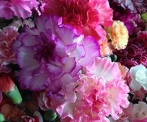 お探しのお花購入のお手伝い