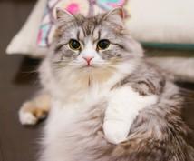 大切なペットちゃんの気持ちを通訳いたします ~動物さんの心とお話しするアニマルコミュニケーション~