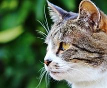 獣医師が療法食や病気のご相談にお答えします 臨床経験35年の獣医師が飼い主さんのお悩みにお答えします