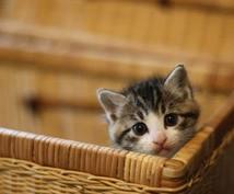 猫のご相談お聞きします 仔猫の困った!のご相談お聞きします