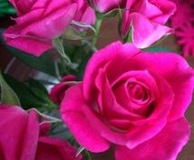 バレンタイン*想いを伝えるあなたを応援します あなたにとって今必要なカラーで後押しします*