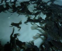 【副業】アフリカツメガエル養殖