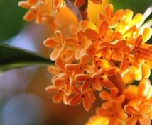 金木犀の花のパワーをお届け致します 【第1回 スピリチュアル フラワー メディテーション】を実施