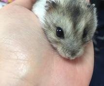 ペット、動物業についての相談乗ります ペット、流行りの動物業ペットシッター