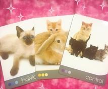 猫ちゃんからの一言メッセージをお伝えします 癒されたい、前に進みたいあなたのお手伝いをします!